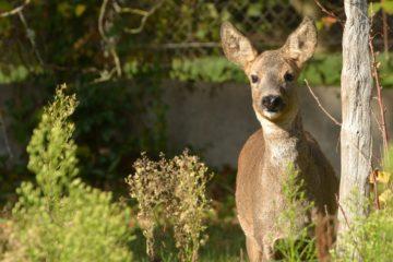 Jak dopasować siatkę do określonego gatunku zwierząt?